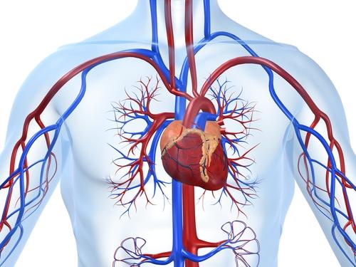 Курение вредит сердцу и кровеносным сосудам