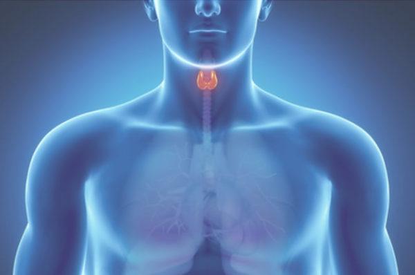Никотин сильно нарушает работу щитовидной железы
